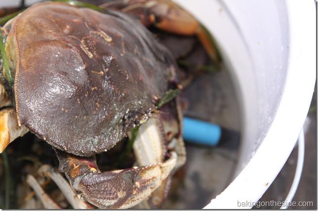 crabbing 023